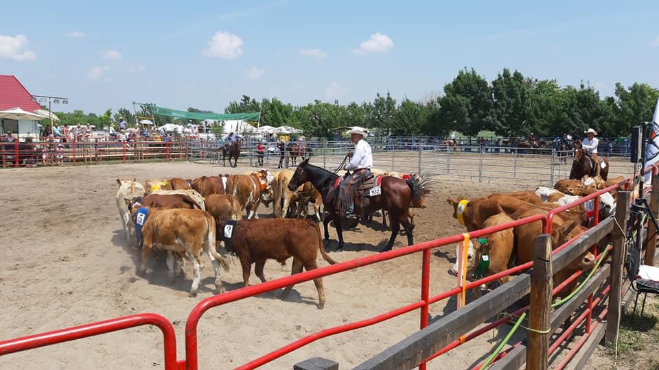 Western lovas OB. 1. forduló – magazin